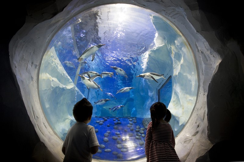 Two young children watching penguins swimming at the Sealife centre